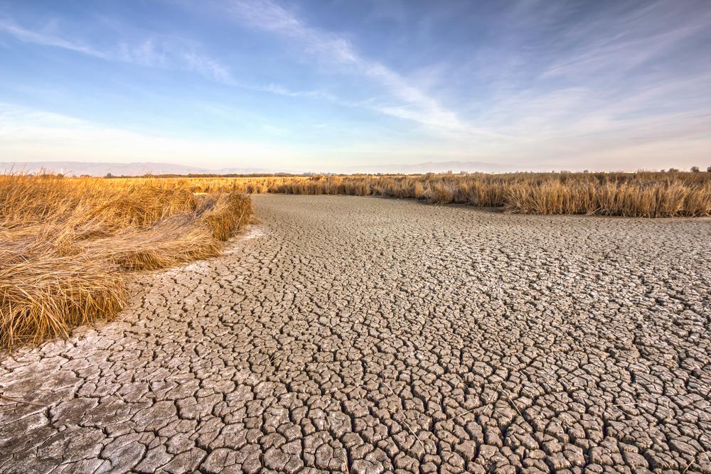 Dry land.