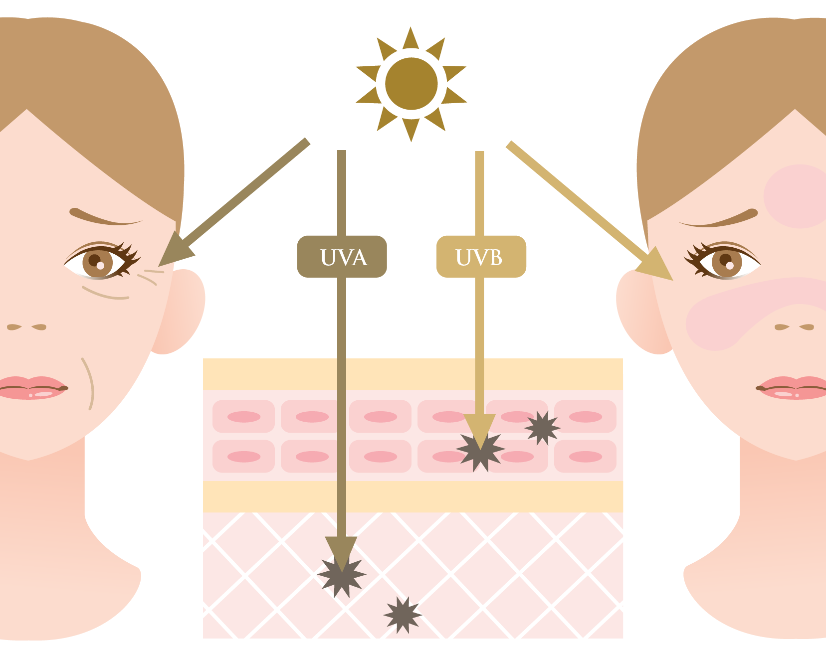 Illustration of UVA and UVB damage on the skin
