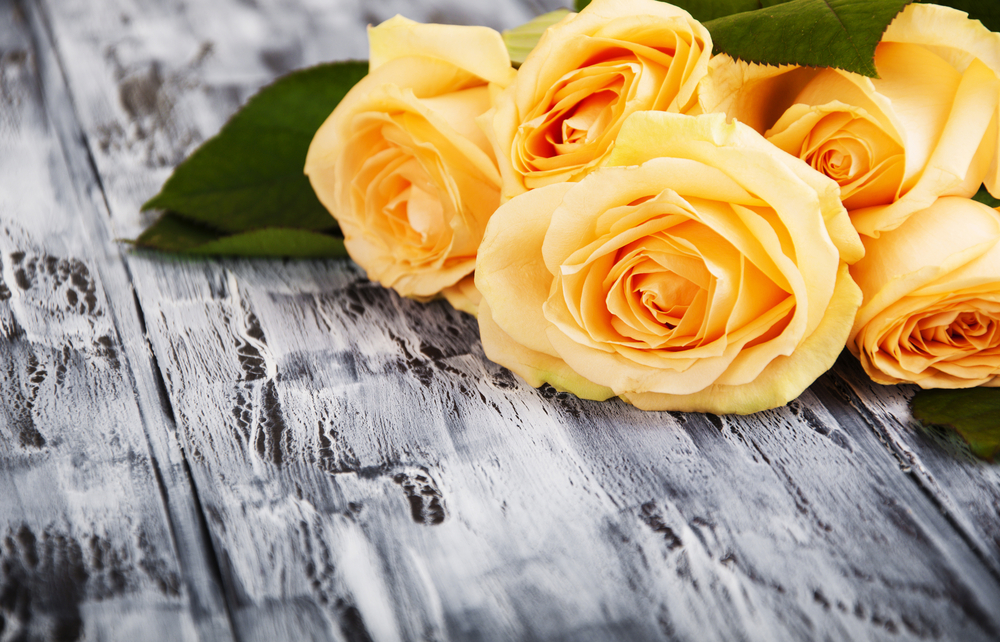 Tag archive for meaning of yellow rose oro gold school there are few flowers as symbolic as the rose it draws instant attention when it turns up in an arrangement or even on its own due to strong associations mightylinksfo