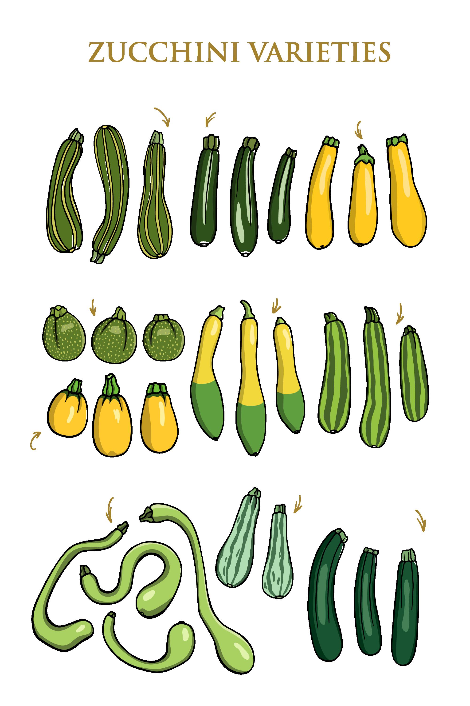 zucchini variety