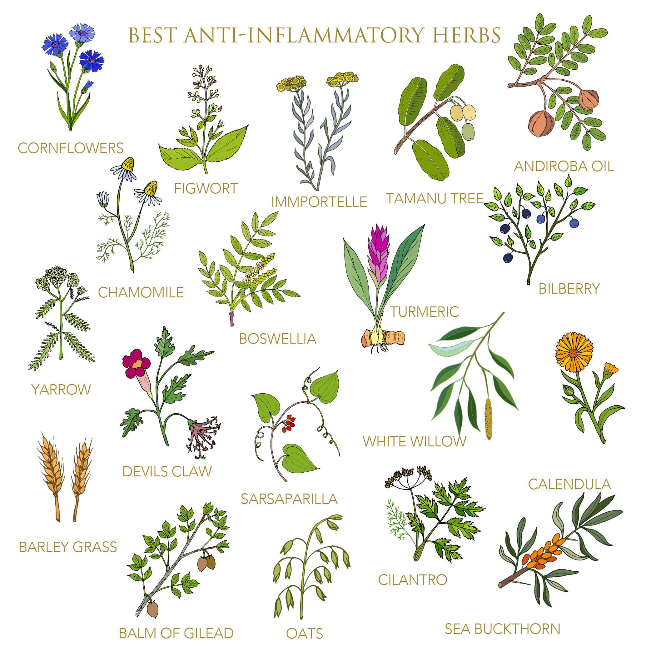 anti-inflammatory herbs infographic