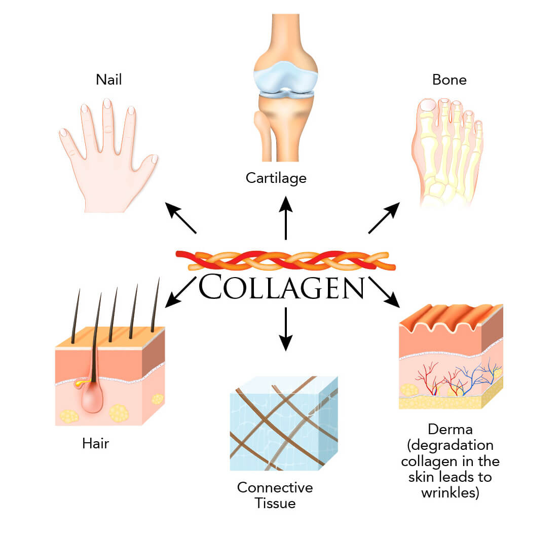 Infographic on areas of the body where collagen is produced and can be found