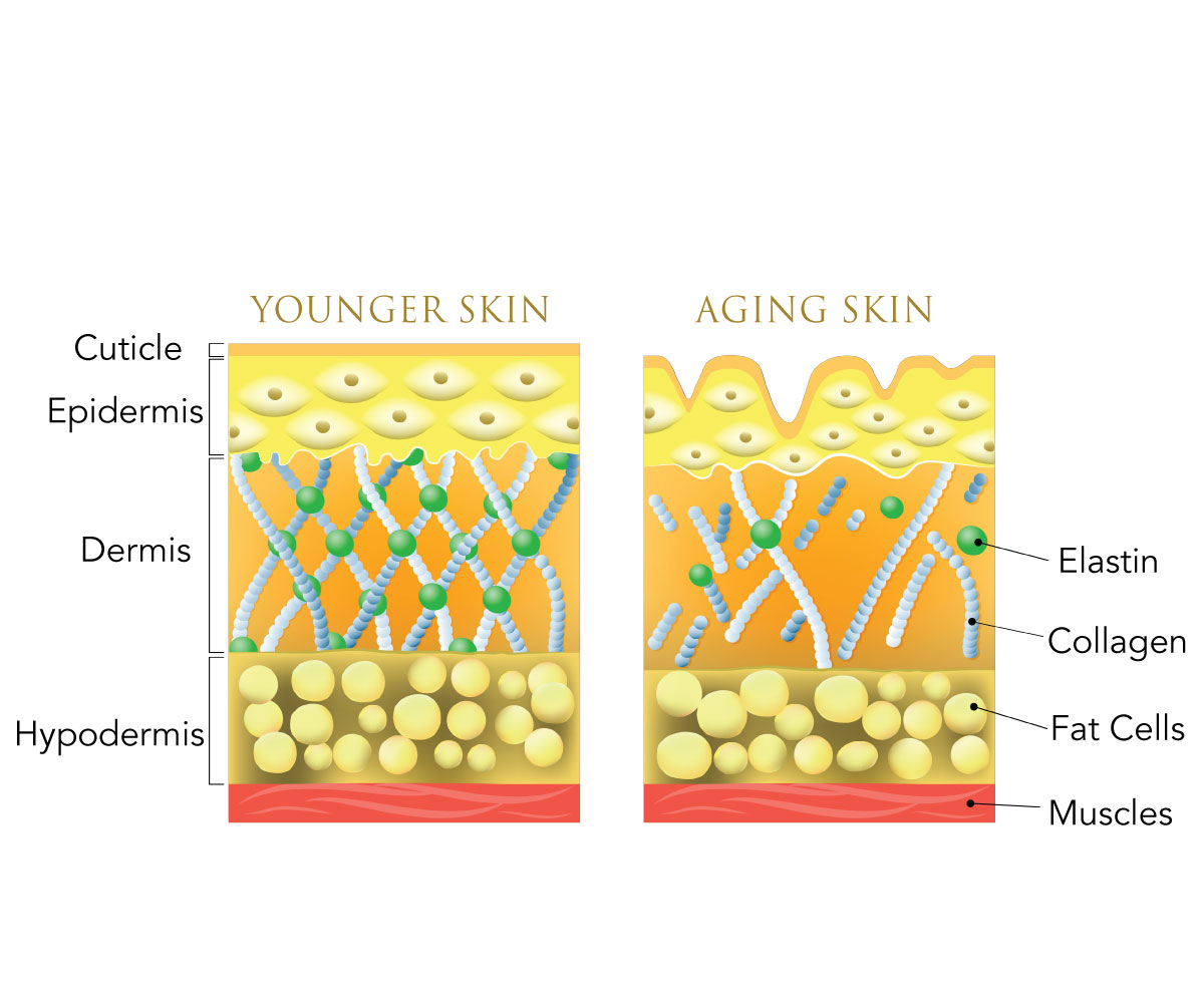 Infographic on different layers of the skin